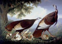 "Robert Havell, c. 1835 ""A Family of Turkeys"" A London Salmagundi: Photo"
