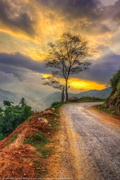 Country roads - Inspiring sunset painting idea Lone tree on road (Sapa, Vietnam) by Fxhfh Eyrndj cr c Landscape Photography Tips, Sunset Photography, Photography Software, Photography Bags, Photography Backgrounds, Photography Accessories, Photography Lighting, Iphone Photography, Portrait Photography