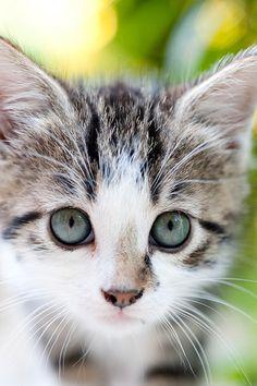 Chat aux yeux verts