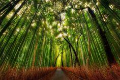 Arashiyama's bamboo forest