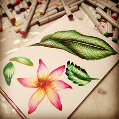 trying copic sketching grays copic markers and sketchbooks rh pinterest com coloring flowers with copic markers book Copic Markers Coloring Skin