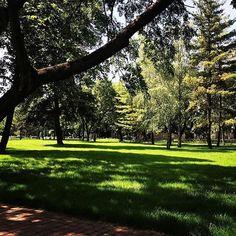 #laivindur #timisoara #banat #timis #transilvania #transylvania #follow4followback #followforfollowback #followers #followbacknow #follow_me #beautifulday #beautifuldays #park #greenpark #greenparks #trees #trees #trees #greengrass #treepark #beautifulpark #parc #copaci