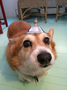 Do you like my new shiny hat?