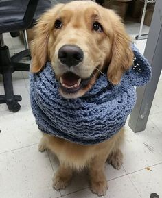 Baby, it's cold outside... - Imgur