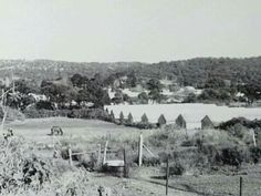 Warriewood in the Northern Beaches region of Sydney in glasshouses in the centre of photo. Avalon Beach, North Shore, Aerial View, Old Photos, Over The Years, Beaches, Sydney, Past, Australia