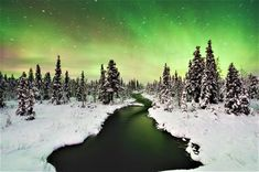 Making up over a quarter of Sweden, Swedish Lapland is a massive region where nature is the star of the show. Here's what you can't miss on your next trip… Aurora Borealis, Aurora Forecast, Aurora Sky, Winter Words, Sweden Travel, Scandinavian Countries, Unique Trees, See The Northern Lights, Arctic Circle