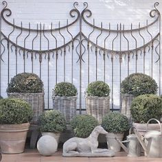 Love the pair of Antique gates as a backdrop to a collection of topiary spheres. Reposted from Her personal garden. Topiary, Potted Plants, Garden Pots, Garden Design, Backdrops, Outdoor Structures, Gates, Antiques, Collection