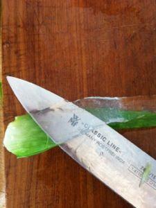 Aloe vera gel selbst herstellen