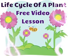 This is a wonderful video to teach children about plant growth and life cycle! Colorful animations, read aloud text, and labeling of vocabulary words are some of the outstanding features of this video! Free!