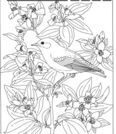 Click Mountain Bluebird And Lewiss Mock Orange Idaho Bird Flower Coloring Page For Printable Version