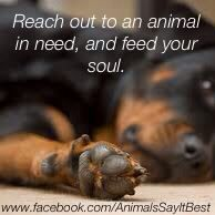 Reach out to an animal in need, and feed your soul. | via Animals Say It Best http://facebook.com/AnimalsSayItBest
