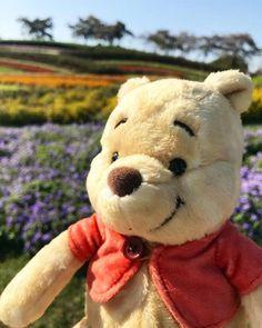 Winnie The Pooh Pictures, Cute Winnie The Pooh, Winnie The Pooh Quotes, Winnie The Pooh Friends, Vintage Winnie The Pooh, Cute Cartoon Drawings, Disney Drawings, Eeyore, Tigger