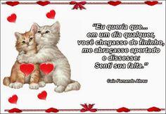 Google+ Cats, Google, Animals, I Miss U, Love Messages, Gatos, Animales, Animaux, Animal
