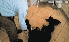 funny-gif-puppies-drinking-milk