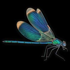 What A Beautiful Dragonfly