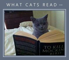 Ten Pictures of Cats Reading Books Trying to Educate Themselves Kittens Cutest, Cats And Kittens, Fury Quotes, Cat Reading, Reading Books, Books To Read, My Books, What Cat, A Court Of Mist And Fury