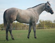 FIRST DOWN LEAVING - 2004 Gray Quarter Horse Stallion