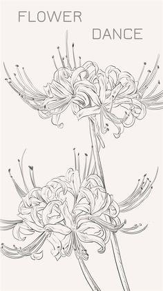 曼珠沙华,又称彼岸花。一般认为是生长在三途河边的接引之花。花香传说有魔力,能唤起死者生前的记忆。