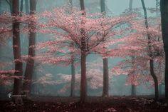 Mysterious Nature Photography by Lars van de Goor #inspiration #photography