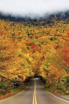 #autumn #tree #tunnel