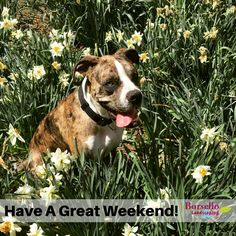 Have a great weekend! Share this image to share the Friday Love. www.borsellolandscaping.com