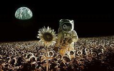 Flores Em Marte