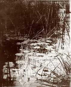 Eugène Atget  White water lily    date? around 1908