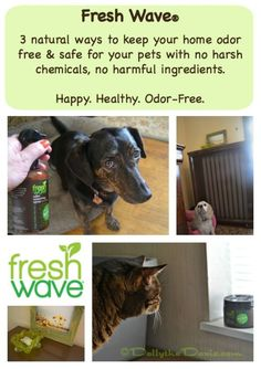 Enter to win Fresh Wave products for a happier life. They are natural, non-toxic products that eliminate odors and are safe for use in your pet household.  | Natural | Non toxic | Safe for pets |