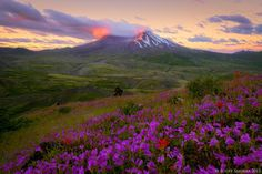 Mount St. Helens National Volcanic Monument, Washington; Recovery by Scott  Smorra on 500px