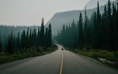 HD wallpaper: road surrounded with trees, nature, landscape, car, pine trees