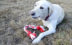This DIY T-Shirt Toy Is The Sweetest Thing You Can Make For Your Dog