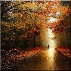 Caminhos M: Bem vindo Outono...