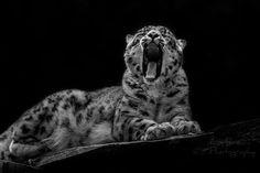 Fotograf sleepy ? von Antje Braun auf 500px