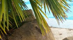 lucertola in spiaggia