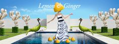 Lemon & Ginger - plunge with delight into the serenity of this new Classic tea by SPECIAL. Special T, Ginger Tea, Tea Time, Serenity, Lemon, In This Moment, Classic, Outdoor Decor, Green