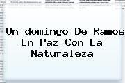 http://tecnoautos.com/wp-content/uploads/imagenes/tendencias/thumbs/un-domingo-de-ramos-en-paz-con-la-naturaleza.jpg domingo de ramos. Un domingo de ramos en paz con la naturaleza, Enlaces, Imágenes, Videos y Tweets - http://tecnoautos.com/actualidad/domingo-de-ramos-un-domingo-de-ramos-en-paz-con-la-naturaleza/