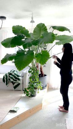 Indoor Shade Plants, Best Indoor Plants, Outdoor Plants, Hanging Plants, Indoor Garden, Home And Garden, House Plants Decor, Plant Decor, Decoration Plante