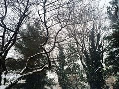 Blizzard: Round 2  #snow #trees #blizzard #snowstorm #forest #nature #naturegram #instanature #landscape #snowflakes #ice #tree #branches #cold #white #green #colors #blizzard2016 #snowmageddon #snowmageddon2016 #snowpocalypse #snowpocalypse2016 #travel #virginia #northernvirginia #nova by michellesebreny