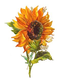 Antique Images: Free Flower Graphic: Sunflower Clip Art of 2 Victorian Scraps