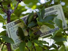 Feng Shui: What is a Money Tree?: The feng shui money tree is a feng shui symbol of vibrant and well-rooted energy; a growing energy that you would like to see reflected in your own money. Is feng shui money tree the best feng shui cure for wealth? You decide.