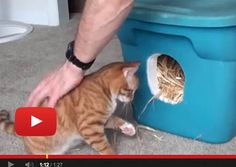How to Make a Feral Cat Shelter  >  A shelter for dogs would require two cardboard boxes, one to fit in the larger, with the straw and so on...