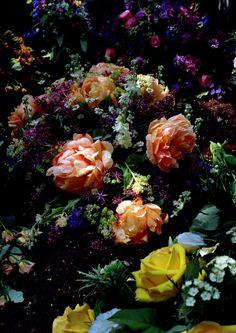 Roses - Guy Bourdin This reminds me of Wonderland. Guy Bourdin, Bloom, My Flower, Beautiful Flowers, Dark Flowers, Pastel Flowers, Rose Bush, Arte Floral, Belle Photo