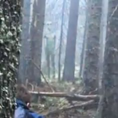 Paranominal: Did These Hikers Photograph an Alien Grey in the Forest?