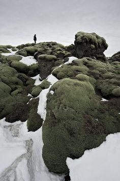 Moss lands of Iceland