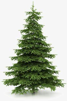 Pino de Navidad, Arbol De Navidad, Cypress, Planta Imagen PNG