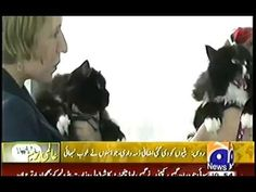 Funny Cat Boss Video clips from USA Must Watch Funny Video of the year