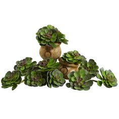 Bring a zen like touch to any decor with the Echeveria Succulent Arrangements from Nearly Natural. Featuring layers of soft, lush leaves, this set of twelve succulents elevate any surface with a textured and realistic look. Artificial Plants And Trees, Artificial Succulents, Artificial Flowers, Trees To Plant, Succulent Arrangements, Planting Succulents, Planting Flowers, Succulent Plants, Garden Plants