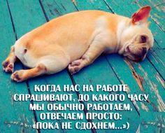 """Когда нас на работе спрашивают, до какого часу мы обычно работаем, мы отвечаем просто: """"Пока не сдохнем ..."""" #мотивация #юмор #собаки"""