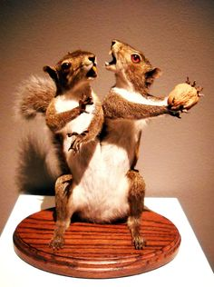 Crikey!  This is rouge taxidermy all right!  (not sure about the rouge spelling...)