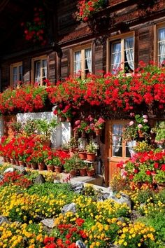 Black Forest flowers and window boxes, Germany